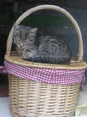 Kitten in Lacock by Jennifer Ciotta